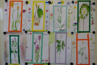 Skládané obrázky rostlin